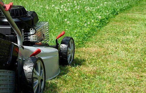 mantenimiento de jardines y espacios verdes en madrid