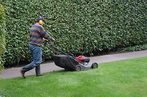 servicio mantenimiento de jardines y zonas verdes para comunidades en madrid